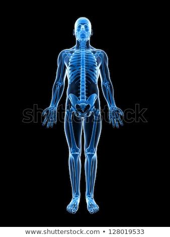 X-ray illustration of human body and skeleton Stock photo © 4designersart