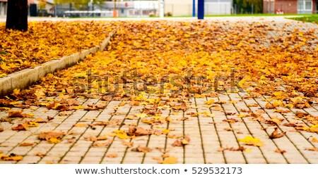 Fallen Maple Leaves on Sidewalk Stock photo © tainasohlman