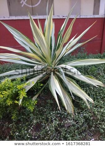 fehér · zöld · nedvdús · növény · közelkép - stock fotó © stocker