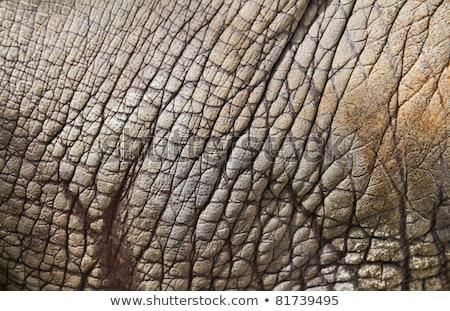 Skóry rhino szary zwierząt naturalnych odkryty Zdjęcia stock © Arrxxx