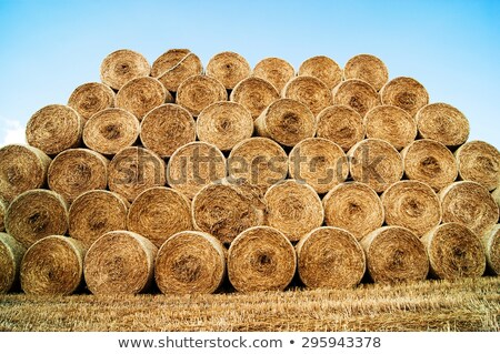 Landscape with straw bales in end of summer stock photo © joruba