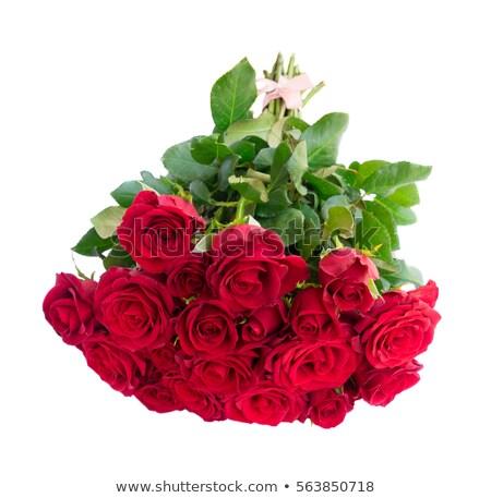 rozenblaadjes · Rood · rose · bloemblaadjes · geïsoleerd - stockfoto © neirfy