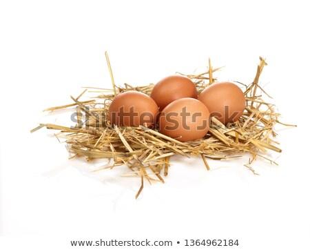 три · яйца · гнезда · белый · яйцо · свежие - Сток-фото © mycola