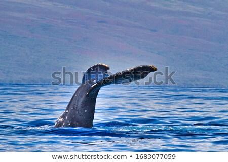 Klaar duik detail water zee Blauw Stockfoto © jirivondrous