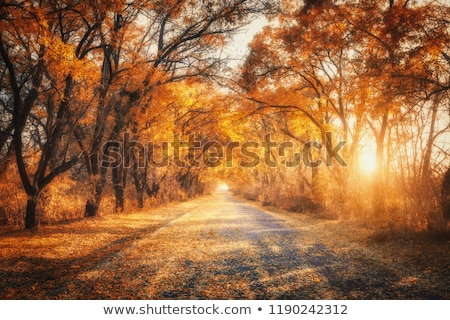 Autumn landscape on country road Stock photo © mahout