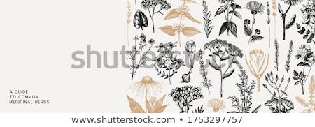 çiçek · basit · yalıtılmış · beyaz · yaz · yeşil - stok fotoğraf © Mr_Vector