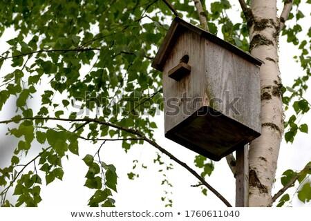 birdhouse on the birch Stock photo © brux