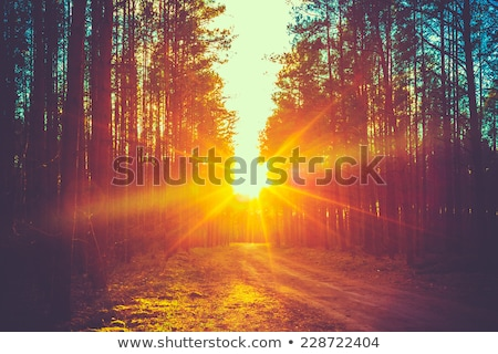orange sunset with sunbeams Stock photo © Mikko