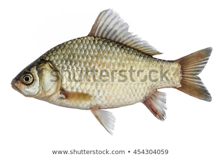 small carp fish Stock photo © jonnysek
