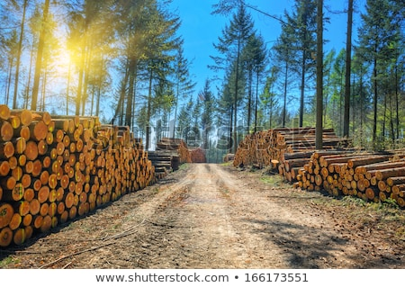 Timber Industry Background with Lumberjack Stock photo © Voysla