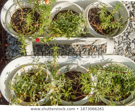 Stock photo: Seedlings, potting soil and flowerpots on a patio