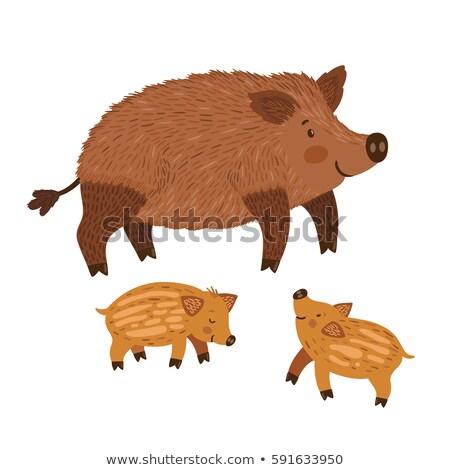 small wild pig  Stock photo © jonnysek