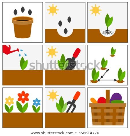 Groving sedlings. Seeds, seedlings and harvest Stock photo © orensila