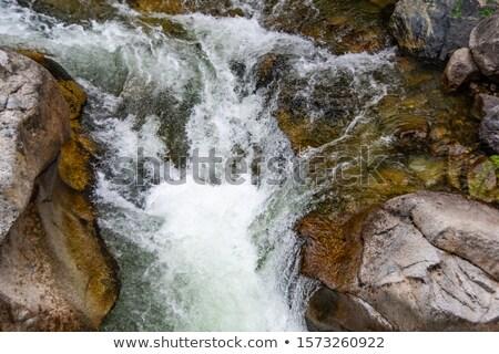 córrego · pedras · coberto · plantas · folhas - foto stock © artfotoss