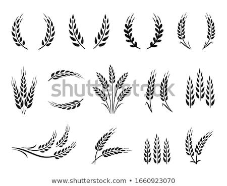 органический зерна пшеницы деревенский макроса Сток-фото © keko64