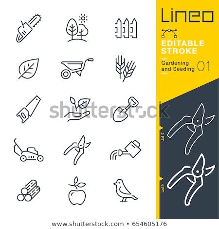 gyümölcsfa · vonal · ikon · háló · mobil · infografika - stock fotó © rastudio
