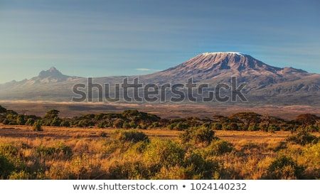 Mount Kilimanjaro, the highest mountain in Africa Stock photo © meinzahn