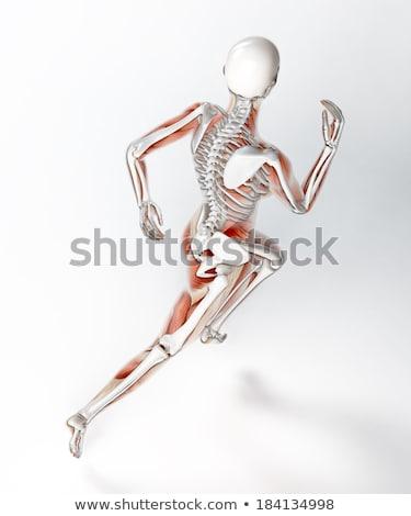 esecuzione · femminile · medici · scheletro · rendering · 3d · esercizio - foto d'archivio © kjpargeter