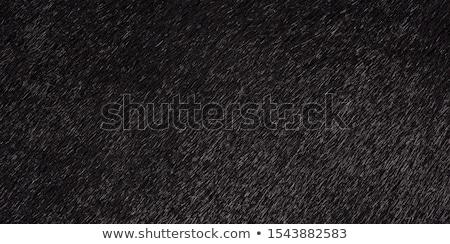 fekete · tehén · közelkép · farm · mezőgazdasági · ipar - stock fotó © oleksandro
