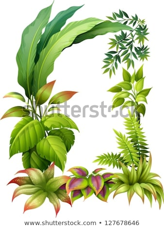 A plant with elongated leaves Stock photo © bluering