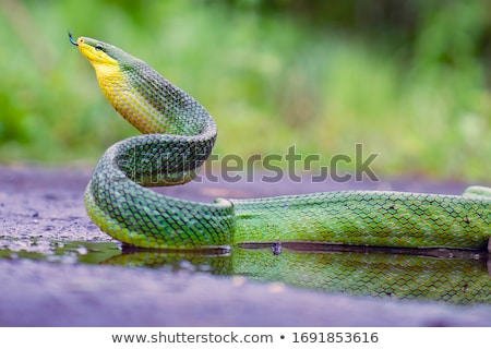 змеи Scary белый лице фон Сток-фото © bluering