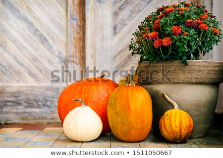 pumpkins on door steps stock photo © hraska
