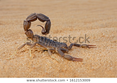 Stock photo: A desert with a scorpion