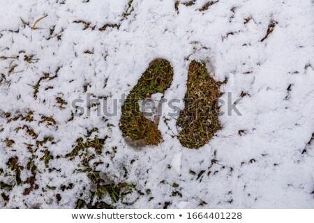 Hemp grows snow Stock photo © romvo