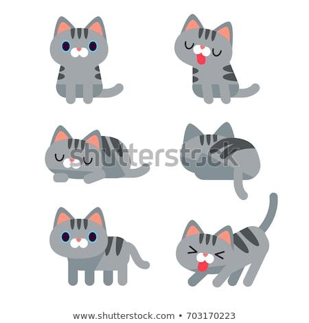 Diverso gatto grigio illustrazione sfondo arte gruppo Foto d'archivio © bluering