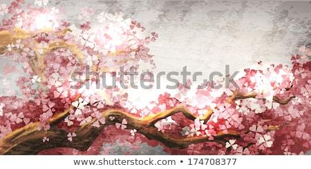Ramo sakura cidade parque primavera Foto stock © manera