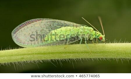 フライ 緑 孤立した 白 昆虫 バグ ストックフォト © Kidza