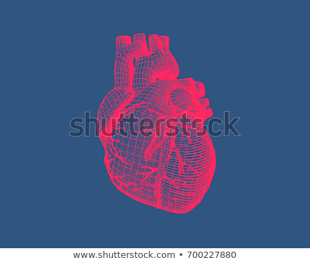 Human heart anatomy engraving. Heart structure retro sketch Stock photo © Terriana