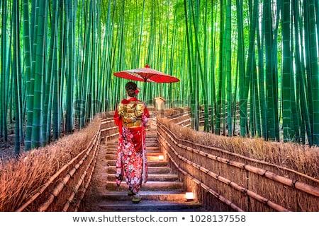 erdő · ösvény · buja · páfrányok · tavasz · természet - stock fotó © daboost