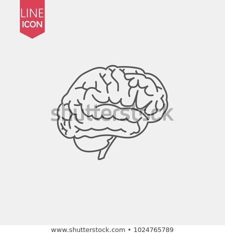 Emberi agy ikon szimbólum értelem tanulás tanul Stock fotó © MarySan