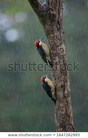 Regenachtig dag verbergen vogel regen betegelde Stockfoto © simply