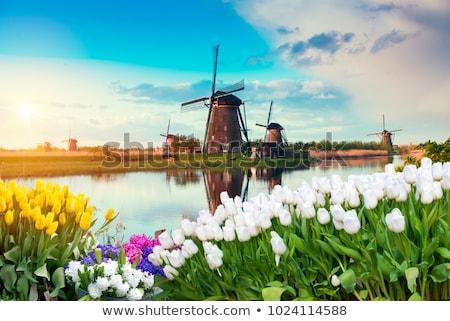 moinho · de · vento · holandês · Holanda · famoso · histórico · água - foto stock © dmitry_rukhlenko