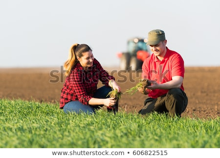 Agriculture, female farmer examining wheat plant in field Stock photo © simazoran