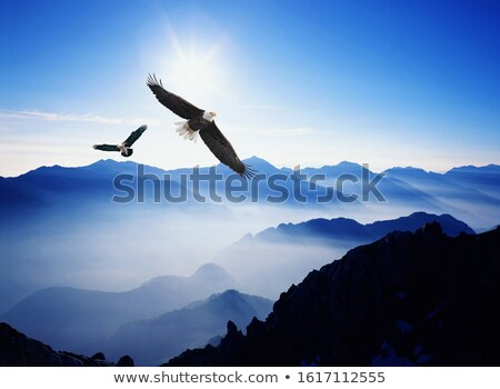 Flying Above Mountains at Sunset Stock photo © THP