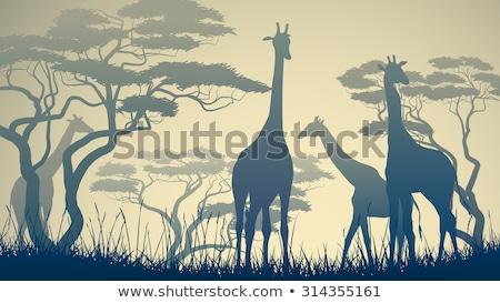 シルエット キリン 森林 シーン 実例 背景 ストックフォト © colematt