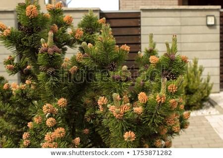 Costruzione recinzione pino crescita home legno Foto d'archivio © robuart