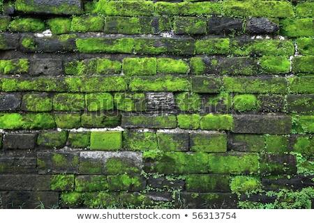 Textúra öreg kőfal fedett zöld moha Stock fotó © galitskaya