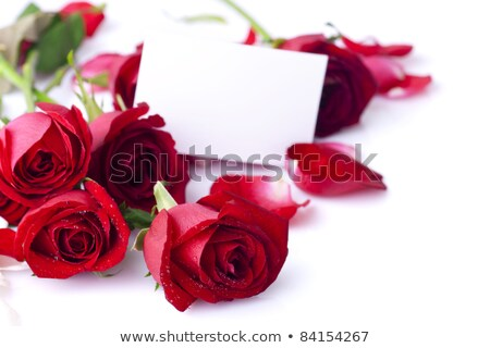 Blank card with rose flower bouquet Stock photo © grafvision
