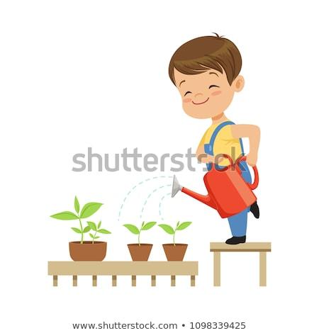 Fiú locsol növények kert illusztráció virág Stock fotó © colematt