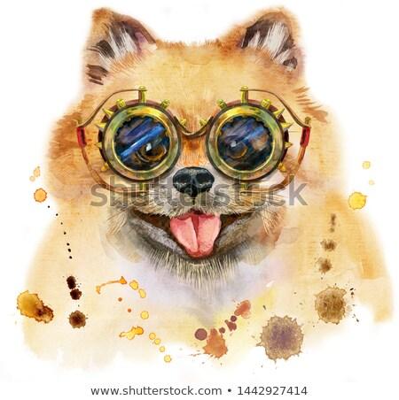 Watercolor portrait of dog pomeranian spitz with steampunk glasses Stock photo © Natalia_1947