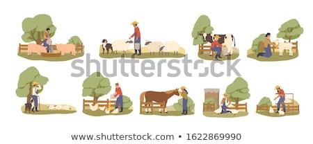 farming people woman feeding chicken hens set stock photo © robuart