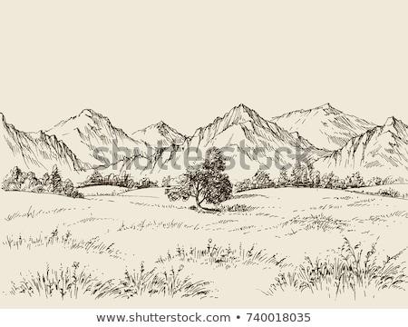Jezioro Szwajcaria trawy krajobraz górskich Zdjęcia stock © lichtmeister
