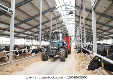 Pracownika mleczarnia gospodarstwa posiedzenia ciągnika ruchu Zdjęcia stock © pressmaster