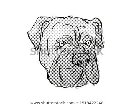 Cartoon rétro dessin style tête Photo stock © patrimonio