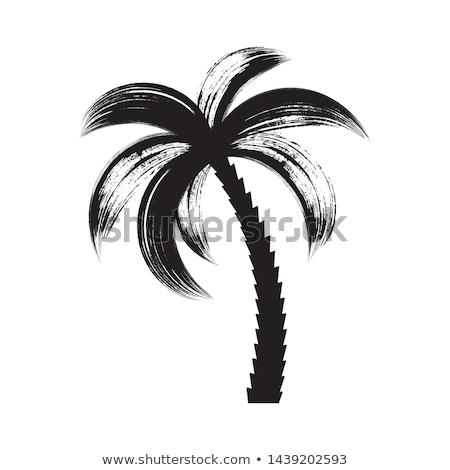 щетка пальмами ретро пляж дерево морем Сток-фото © blumer1979