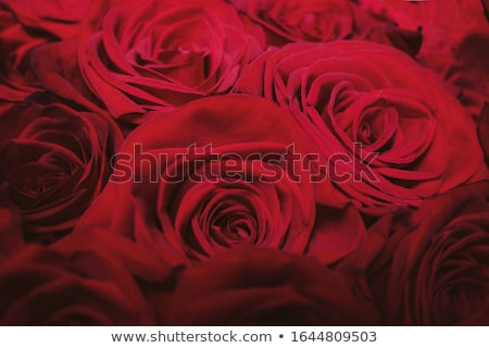 Luxe bouquet roses rouges fleurs fleurir flore Photo stock © Anneleven